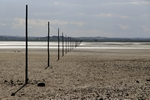 Marker posts, Holy Island, England by Dave Banks