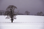 Winter Scene nr Methven, Tayside by Dave Banks