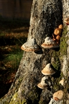 Fungi, Glen Lyon - Dave Banks - Scottish Landscape Photography