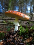 Fungi, Faskally Wood nr Pitlochry, Tayside by Dave Banks