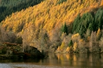 Autumn colours, Loch Tummel, Tayside by Dave Banks