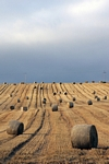 Straw bales nr Methven, Tayside by Dave Banks